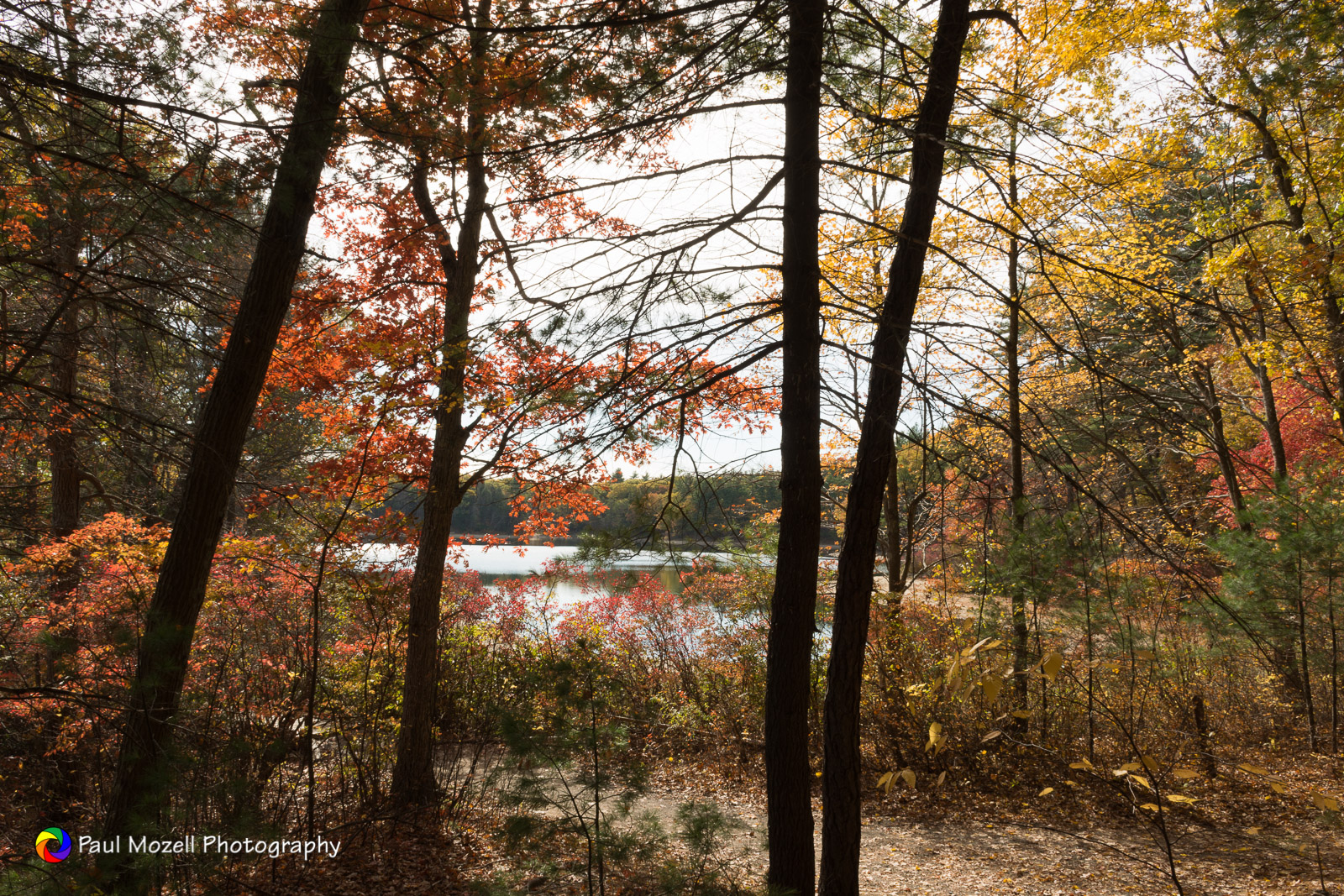 Walden Pond with fall colors. Concord, MA
